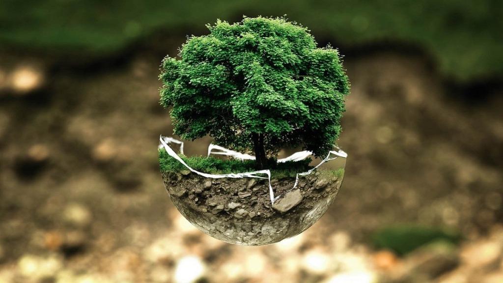 comportamiento ambiental