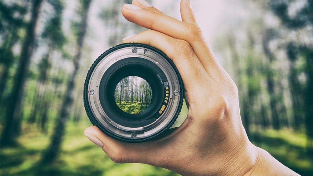 pérdida de visión periférica: imagen de una lente que enfoca correctamente una parte de un bosque